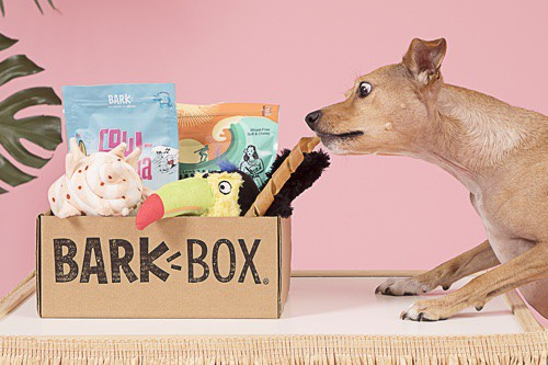 an overview of BarkBox's key features