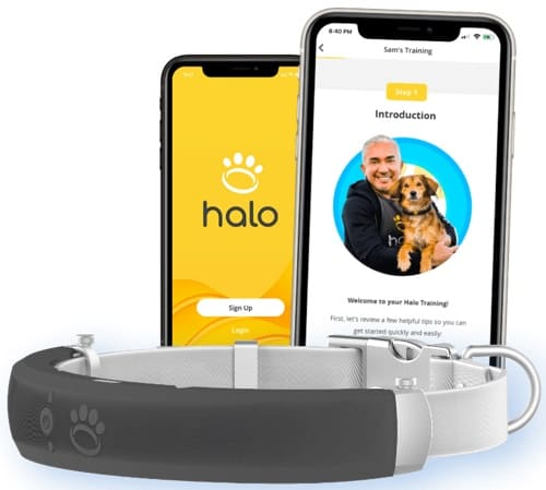 the Halo Collar app and collar