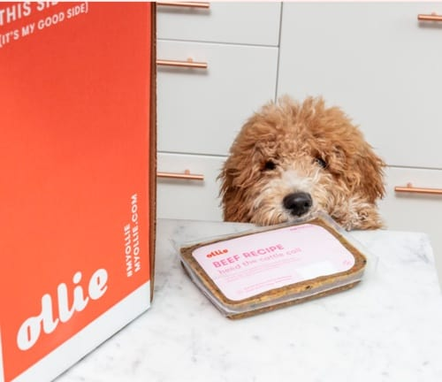 a dog smelling a fresh delivery of Ollie dog food